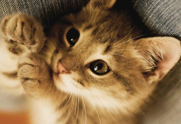 Zwei Kätzchen kamen gleichzeitig aus einer Schachtel: glücklicherweise wurden sie rechtzeitig bemerkt