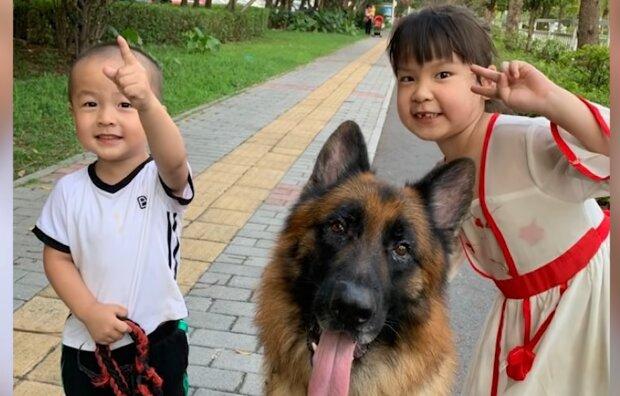 Kluger Schäferhund hilft Mädchen, seinen Vater auszutricksen, indem er seine Hausaufgaben macht