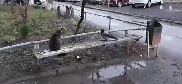 Der Rabe und die Katze. Quelle: Screenshot YouTube