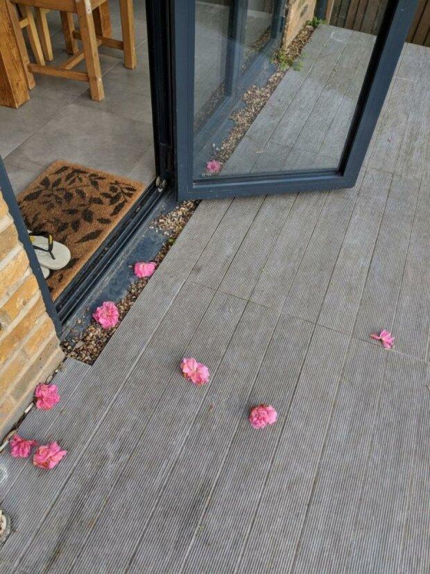 Heimlicher Verehrer: Jeden Tag wurde einer Frau zu Hause Blumen vor die Haustür gebracht