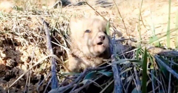 Der verwundete Fuchs selbst begann, Menschen um Hilfe zu bitten und erhielt sie