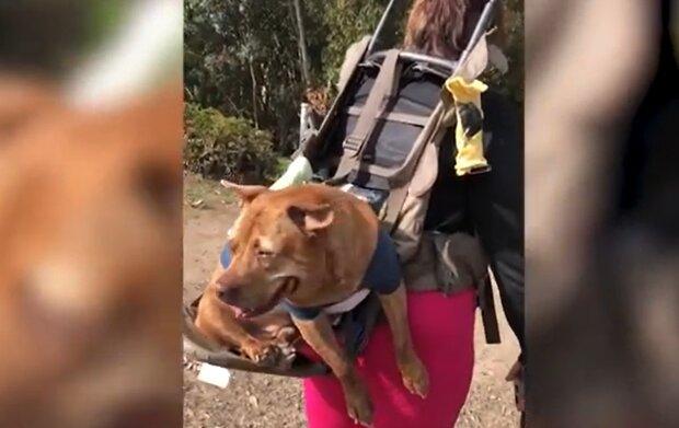 Der ältere Hund hat seinen neuen Besitzer gefunden und trennt sich nun auch auf Spaziergängen nicht mehr von ihm