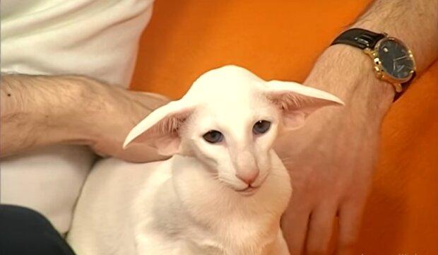Ungewöhnliche, aber schöne Haustiere. Quelle: YouTube Screenshot