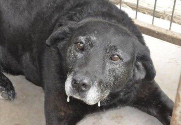 Schwarze Labrador-Mestize. Quelle: Screenshot Youtube