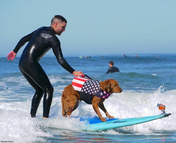 Ein freundlicher Hund surft mit Menschen und hilft dabei, sie zu heilen