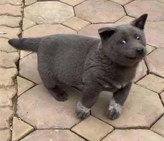 Hund Katze Kreuzung