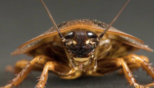 Ein Kakerlak. Quelle:Screenshot YouTube