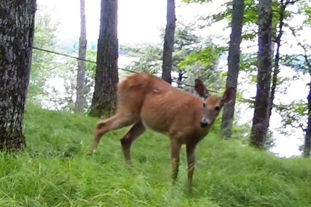 Aufmerksames Tier. Quelle: Screenshot YouTube