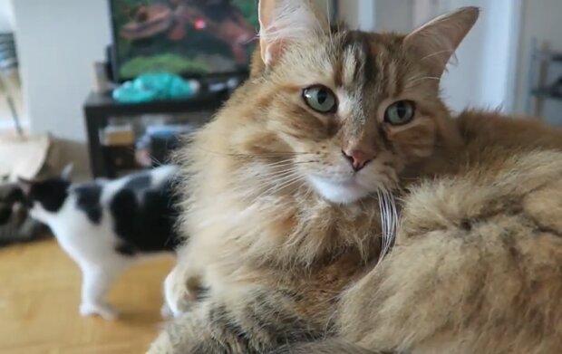 Katzen. Quelle: YouTube Screenshot