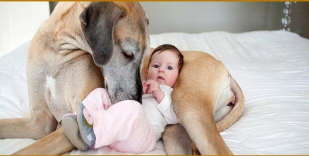 Treuer Freund: Ein Hund erwärmte ein Kind, das zwei Tage lang in der Kälte zurückgelassen wurde