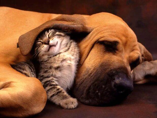 Liebe auf den ersten Blick: Katzen, die in Hunde verliebt sind
