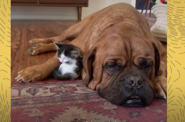 Gegenseitige Hilfe und Unterstützung unter den Tieren. Quelle: Screenshot YouTube