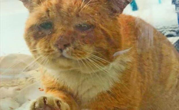 Uglücklisches Tier. Quelle: Screenshot YouTube