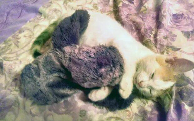 Foto: zen.yandex.com