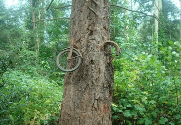 1914 versteckte der Mann ein Fahrrad im Wald und trat der Armee bei