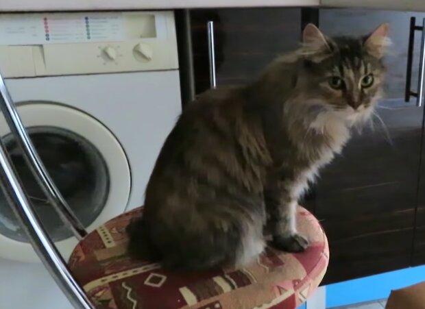 Die Geschichte der Rettung des obdachlosen Kätzchens Meow-Iggy