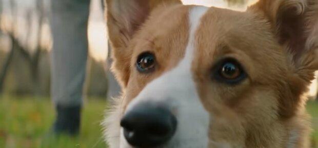 Der Hund hat seine Besitzer gefunden. Quelle: Youtube Screenshot