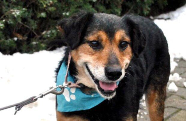 Neues Zuhause: 16-jähriger Tierheimhund bekam endlich neue liebevolle Besitzer