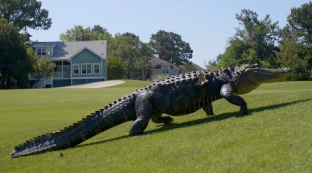 Alligator. Quelle: YouTube Screenshot