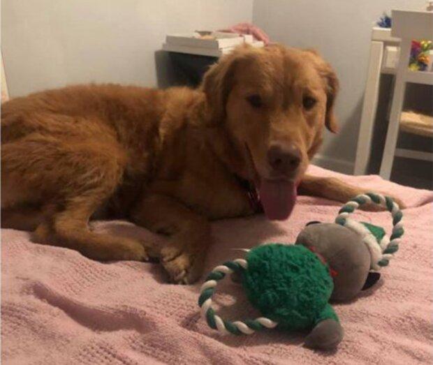 Weg von zu Hause: Der Hund hat sich im Wald verlaufen und kam ein Jahr später nach Hause