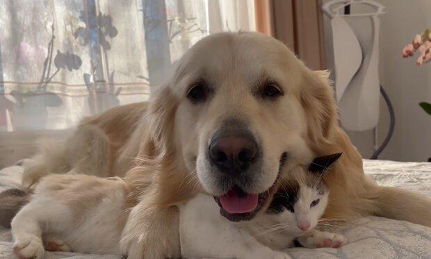Ein Hund rettete ein Kätzchen. Quelle: YouTube Screenshot