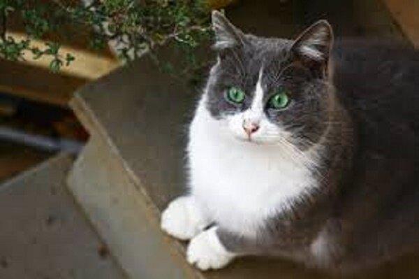 Der Mann beschloss, ein neues Haustier aus einem Tierheim zu sich nach Hause zu nehmen, und fand plötzlich das verlorene