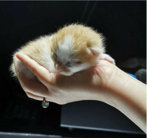 Eine schwangere Katze war im Büro in Shanghai untergebracht und erhielt acht Kätzchen als Geschenk