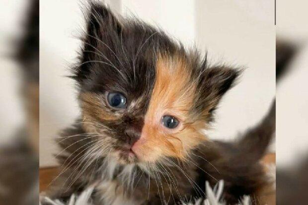 Süßes Baby mit ungewöhnlichem Fell. Quelle: Screenshot YouTube