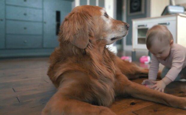 Fürsorglicher Hund. Quelle: YouTube Screenshot