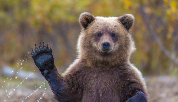 Der Mann kümmerte sich um seine eigenen Angelegenheiten zu Hause und bemerkte nicht, dass der Bär an die Tür klopfte