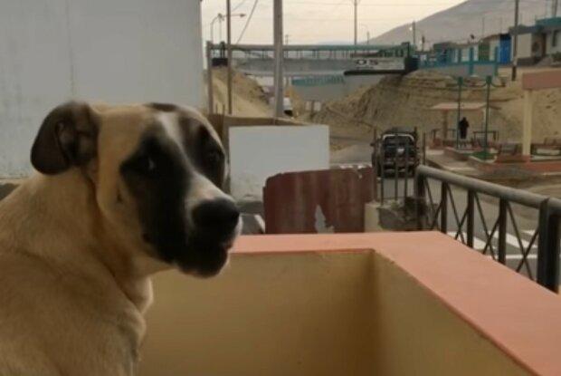 Die rührende Hingabe des Haustieres. Quelle: Screenshot YouTube