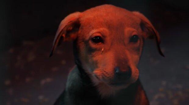 Sie haben einander vor der Einsamkeit gerettet: 72-jährige Frau nahm zwölfjährigen Hund aus einem Tierheim