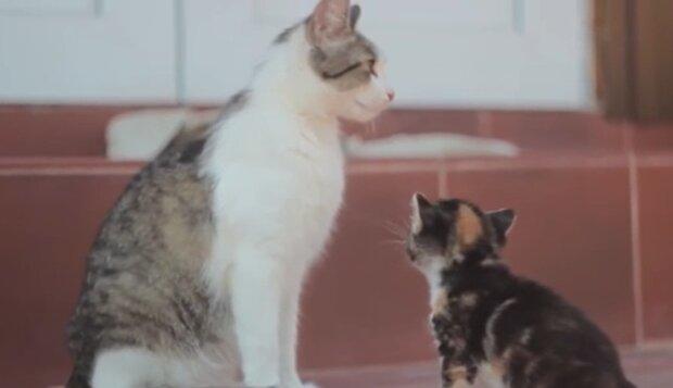 Eine Katze kam ins Kaffe und fing an, an der Tür zu kratzen und zu miauen: sie bat die Menschen um Hilfe und führte sie zu einer Kiste im Wald