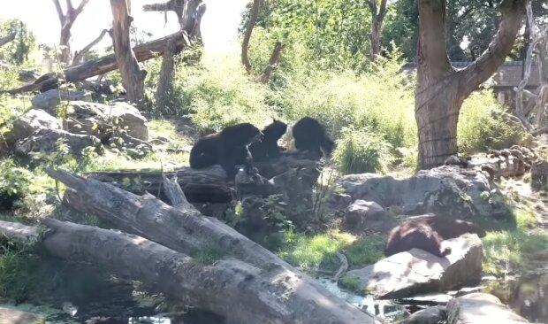 Der Zoo. Quelle: Screenshot YouTube#