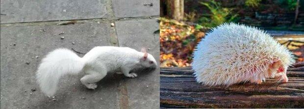 Seltene Albino-Tiere, die mit ihrer außergewöhnlichen Schönheit überraschen