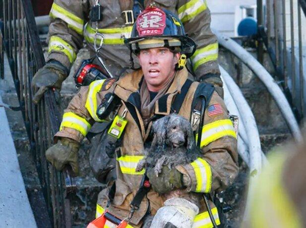 Mutige Feuerwehrleute, die ihr Leben riskierten, um Tiere zu retten