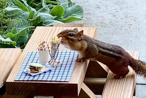 Fürsorge für Tiere: Frau eröffnete ein Streifenhörnchen-Restaurant