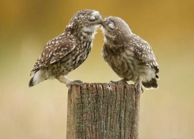 Wie Menschen: Tiere, die keine Minute ohne einander verbringen können