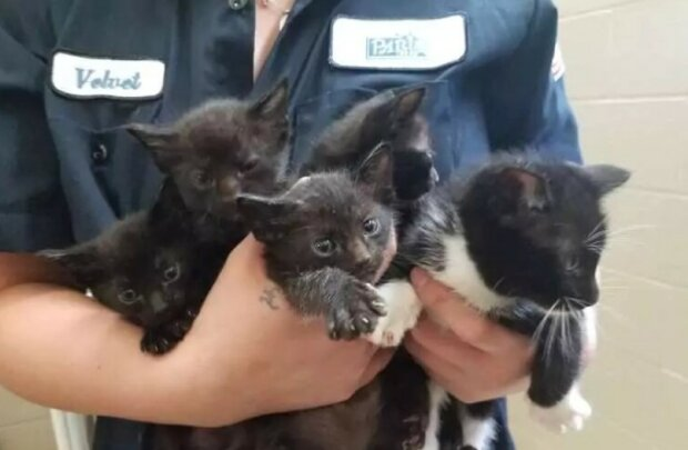 Die Mitarbeiter des Tierheims rechneten nicht damit, dass 39 Kätzchen hergebracht werden würden