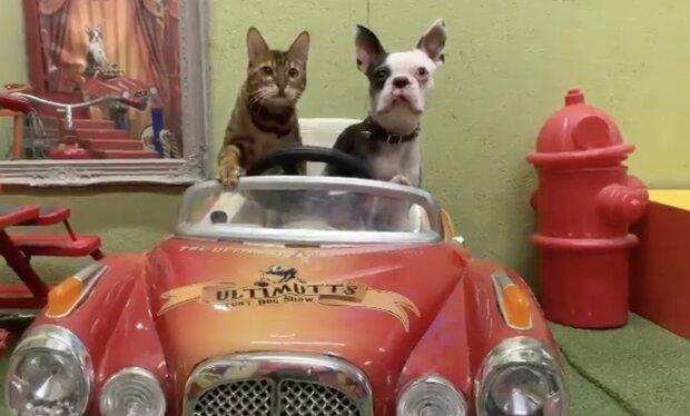Katze und Hund. Quelle: Instagram.com