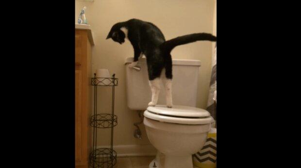 Ein Mann bekam eine höhere Rechnung für Wasser: Es stellte sich heraus, dass seine Katze dafür verantwortlich war