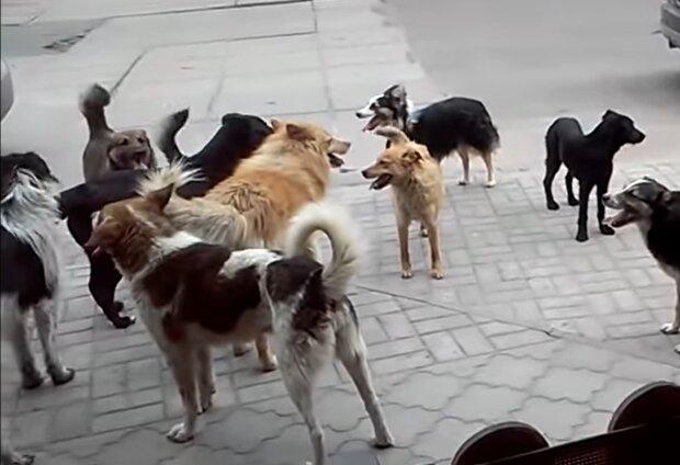Streunende Hunde. Quelle: Screenshot Youtube