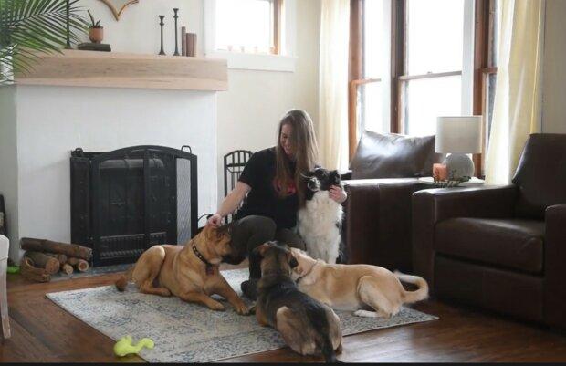 Architektonische Lösung für mehrere Haustiere. Quelle: Screenshot YouTube