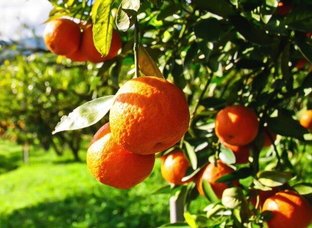 Orangen. Quelle: Screenshot Youtube