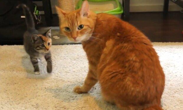 Niedliche Katzenfamilie. Quelle: YouTube Screenshot