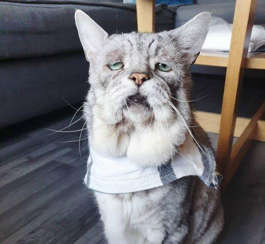 Katze Wird Dünner Im Alter