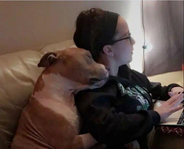 Die Studentin hat einen Pitbull aus dem Tierheim nach Hause genommen, und jetzt hört er nicht auf, sie als Dank zu umarmen
