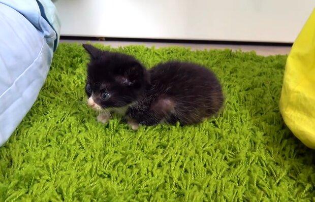 Ein gefundenes Kätzchen namens Coco. Quelle: YouTube Screenshot