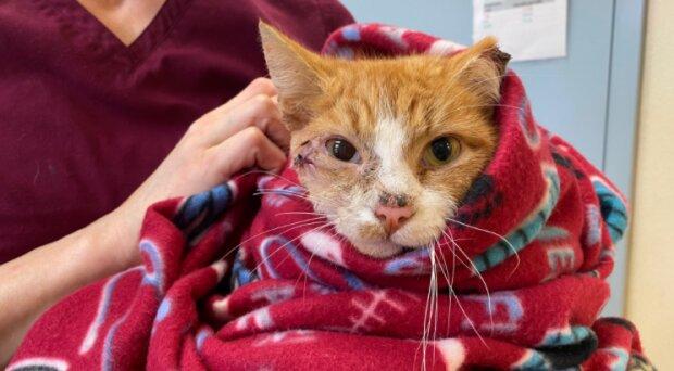 Dank der gut koordinierten Arbeit von Ärzten und Rettungskräften die Katze hat überlebt
