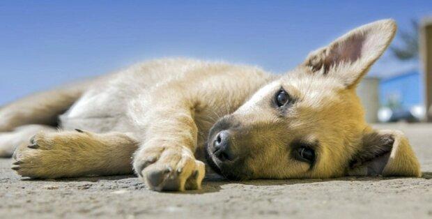Holland ist das erste Land der Welt ohne einen einzigen streunenden Hund geworden